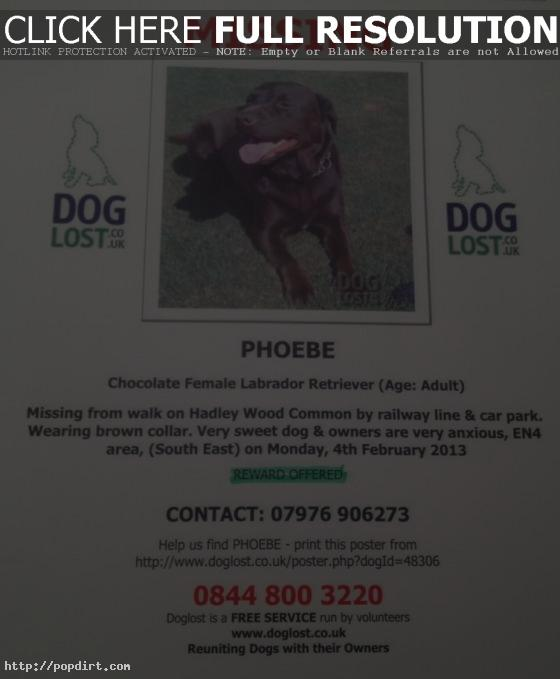 Emma Bunton's missing dog Phoebe